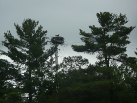 Auspray nest